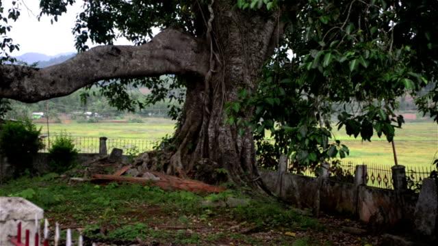 pan shot of megaliths in a desolate nature space in meghalaya,india. - 地衣類点の映像素材/bロール