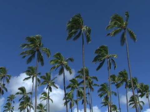 Pan shot of palm trees.