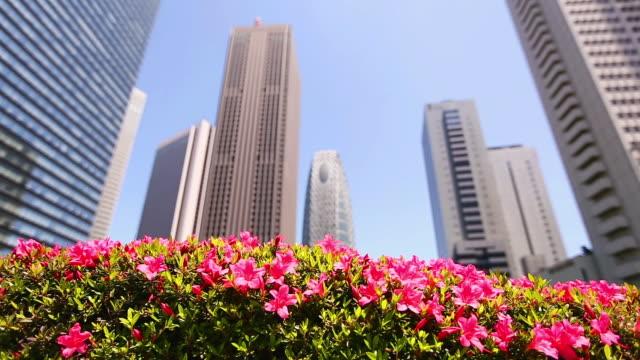 MS Pan Shot of skyscraper behind pink flowers at district of West Shinjuku / Shinjuku ku, Tokyo, Japan