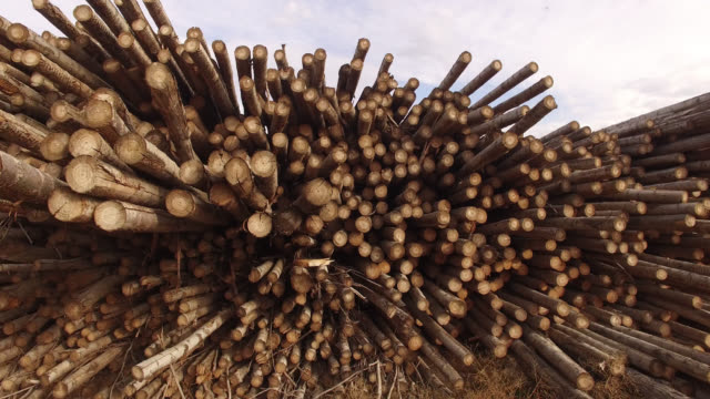 pan shot of stacked logs on field - bauholz stock-videos und b-roll-filmmaterial