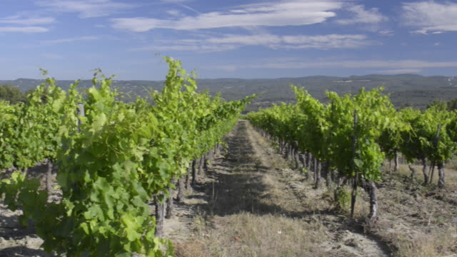 pan shot of vineyard of roussillon - luberon video stock e b–roll