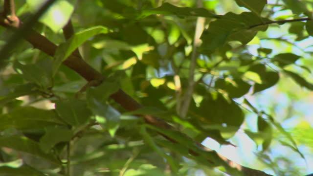 pan to a toucan (HD Video)