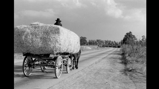 pan to horse drawn cart carrying hay down paved road horse drawn cart carrying hay down paved road on january 01 1948 in california - 働く動物点の映像素材/bロール