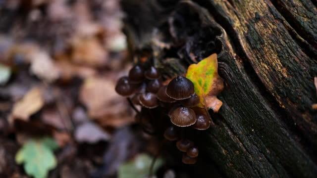 pan to mushrooms growing on tree trunk - tree trunk stock videos & royalty-free footage