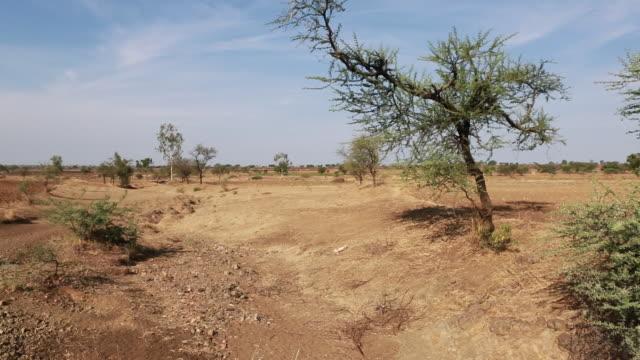 pan to the left a droughtprone landscape in india near belgaum with little vegetation in a very dry climate can be seen as well as a motor bike is... - skadedjursangrepp bildbanksvideor och videomaterial från bakom kulisserna
