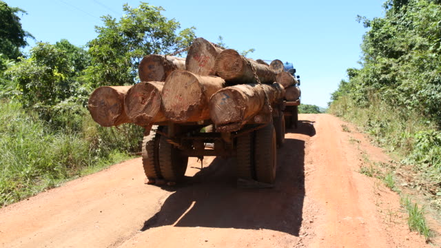 a pan to the right filmed with a handheld camera is showing a parked truck with a load of logs on a dusty country road while the midday sun is... - mittag stock-videos und b-roll-filmmaterial
