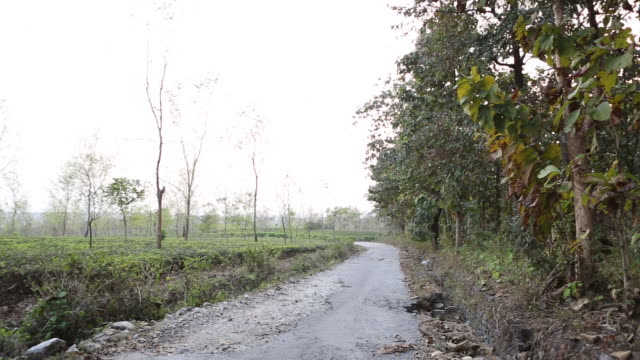 pan to the right to a teak tree on a field near bagdogra - west bengal stock videos and b-roll footage
