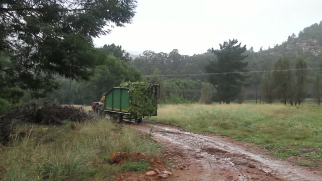 pan truck driving away from the sab miller plc hop farm in george south africa on wednesday march 12 farm workers use a trailer to collect a harvest... - scythe stock videos and b-roll footage