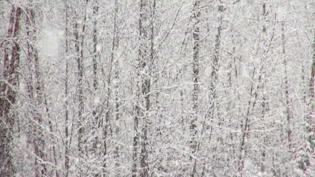 pan up and down telephoto shot of snow covered trees along river bank in mountains during heavy puffy snowflake snow storm. - glacier national park us stock videos and b-roll footage
