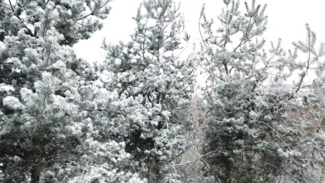 vídeos de stock, filmes e b-roll de a pan up drone shot of snowy trees and buildings in ashford kent - chuva congelada