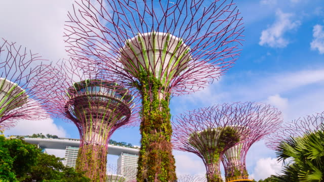 pan up gardens by the bay with supertree grove - grove stock videos & royalty-free footage