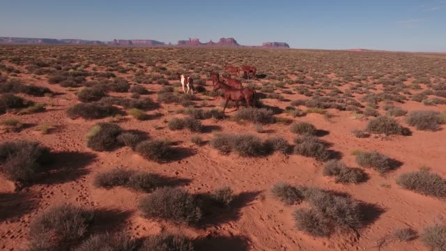 pan up push down to wild horses, drone aerial 4k, monument valley, valley of the gods, desert, cowboy, desolate, mustang, range, utah, nevada, arizona, gallup, paint horse .mov - paint horse stock videos & royalty-free footage
