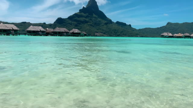 pan up: rays swimming in gorgeous blue water with mountains in the background in bora bora, french polynesia - bora bora stock videos & royalty-free footage