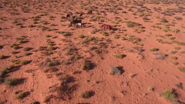 pan up reveal horse and valley wild horses, drone aerial 4k, monument valley, valley of the gods, desert, cowboy, desolate, mustang, range, utah, nevada, arizona, gallup, paint horse .mov - paint horse stock videos & royalty-free footage