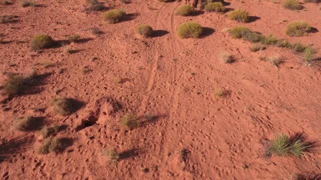 pan up reveal horse and valley wow wild horses, drone aerial 4k, monument valley, valley of the gods, desert, cowboy, desolate, mustang, range, utah, nevada, arizona, gallup, paint horse  copy.mov - paint horse stock videos & royalty-free footage