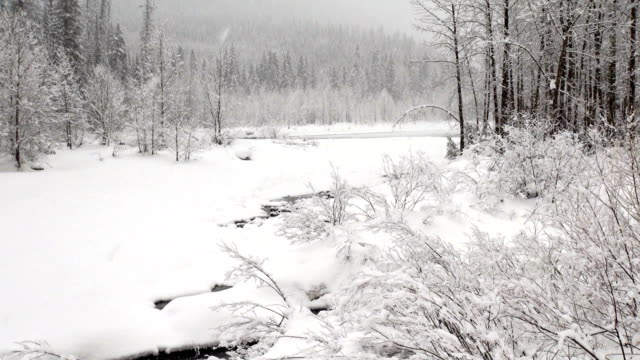 pan up wide shot of snow covered trees along river in mountains during heavy puffy snowflake snow storm. - glacier national park us stock videos and b-roll footage
