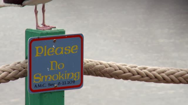 pan upward: no smoking and seagull in redondo beach - no smoking sign stock videos & royalty-free footage