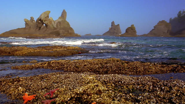 Pan waves crashing among rocky bay with starfish in foreground and large rock formations in background / Washington