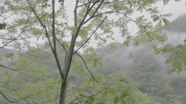 panda on a tree in rainy wolong panda reserve - panda stock-videos und b-roll-filmmaterial
