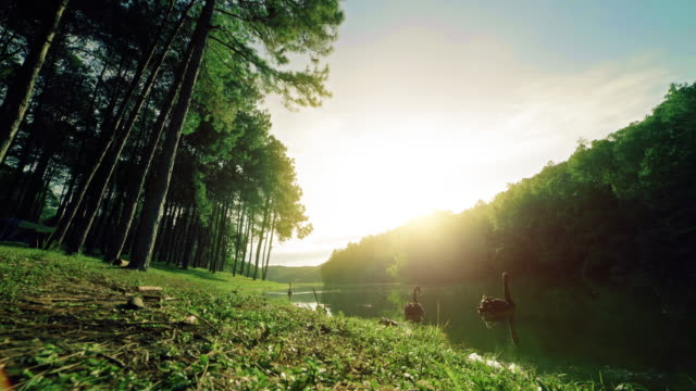 pang ung in the morning - mae hong son province stock videos and b-roll footage