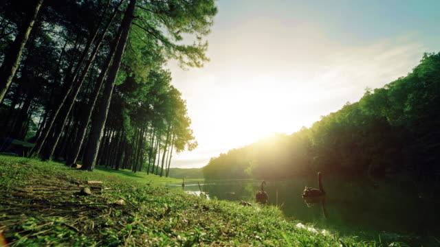 vídeos de stock, filmes e b-roll de pang ung da manhã - lago reflection