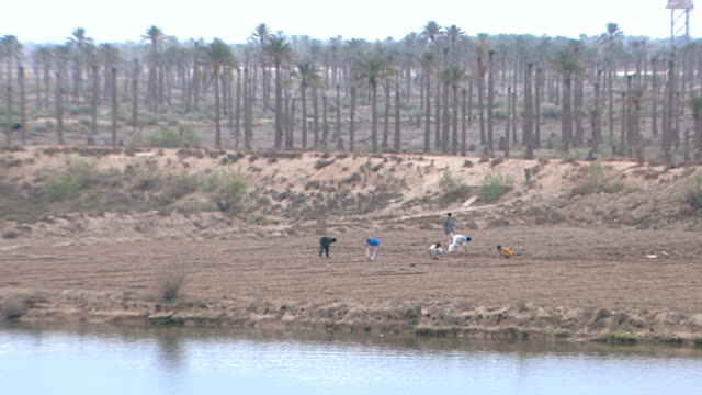 pan-left from farmers sowing seeds in a field on the bank of shatt al-arab. the river is formed by the confluence of the euphrates and tigris and... - basra stock-videos und b-roll-filmmaterial