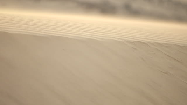 pan-left of wind blowing across a sand dune in the desert. - sand stock videos & royalty-free footage