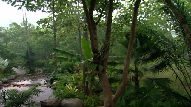 panleft over a densely forested landscape under a downpour of rain - tropical tree stock videos & royalty-free footage