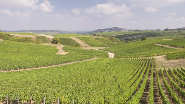 Panned TL of the vineyards of Sancerre, France.