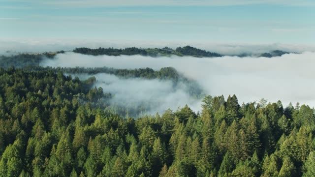 vídeos de stock, filmes e b-roll de antena de panning de montes arborizadas - sequoia sempervirens