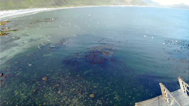 Panning Aerial over rocky inlet and Greyheaded Gulls/ Western Cape/ South Africa