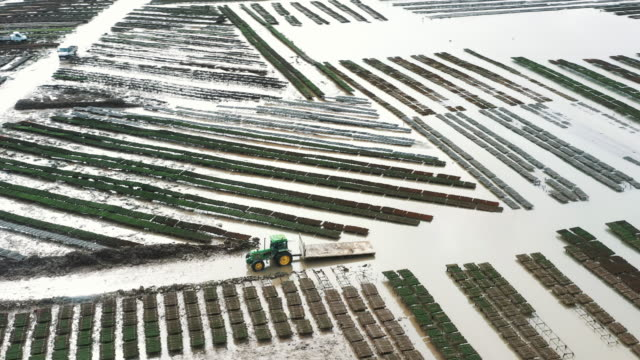 panning aerial shot showing a tractor driving through an oyster farm at low tide, fouras, france - ミヤコドリ点の映像素材/bロール