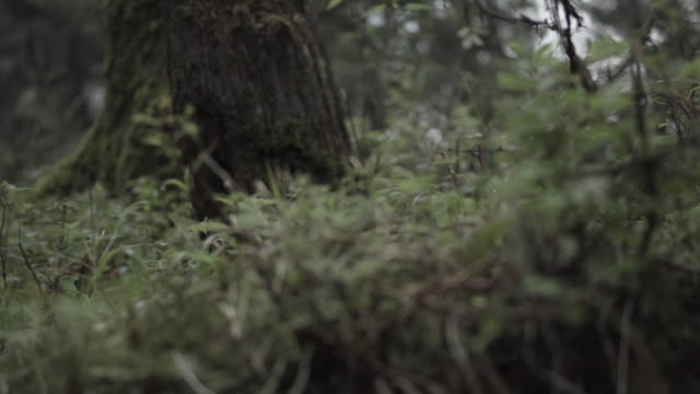 panning along low growing vegetation in woods - desaturated stock videos & royalty-free footage