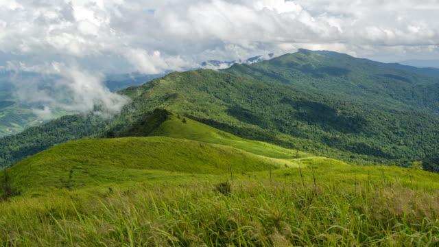 panorering: bland gräs på berget under molnigt - ekoturism bildbanksvideor och videomaterial från bakom kulisserna