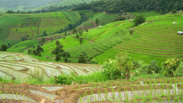 panning: another mountain covereb with green rice but the mountain covered by delighted rice terrace