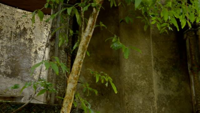 パン:涅槃像は、古代の寺院 - ローカルな名所点の映像素材/bロール