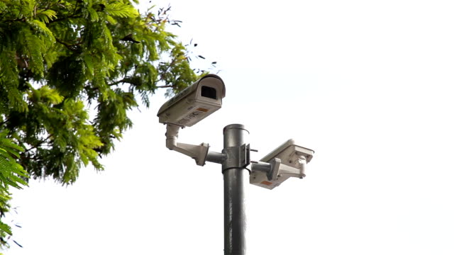 hd panning: cctv on pole under tree. - pole stock videos and b-roll footage