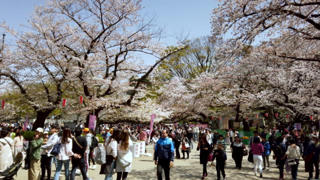 4k panning cherry blossom falling in ueno park tokyo , japan - satoyama scenery stock videos & royalty-free footage