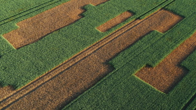 panning drone shot showing unusual patterns in a field, england, united kingdom - staffordshire england stock videos & royalty-free footage