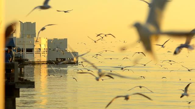 panning :  Gregge di gabbiani volano retro in un porto su alba