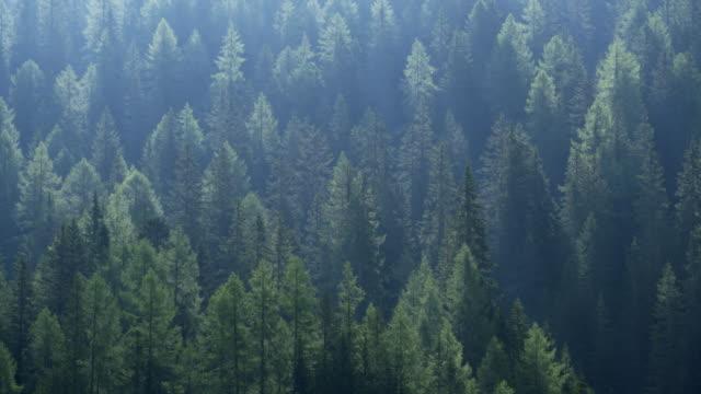 vídeos y material grabado en eventos de stock de panning. forest in back lit. misurina, dolomites, veneto, italy. - back lit