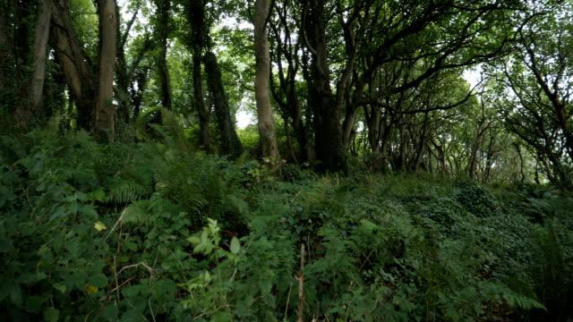 Panorering: pan skogsutsikt, Nordirland