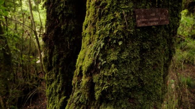 schima 人工ショワジーの梢にパンの形のトランク - 大きい点の映像素材/bロール