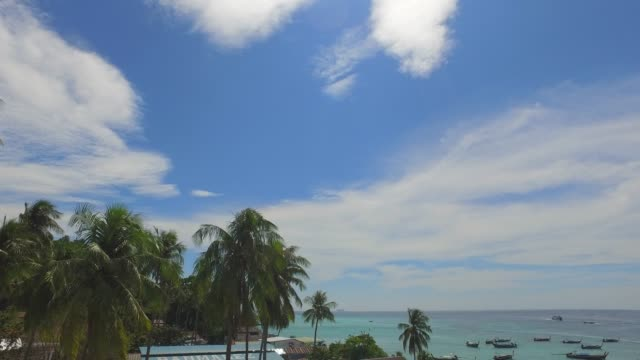 panning from tropical coastline with palm trees to bay with boats anchored - anchored stock videos & royalty-free footage