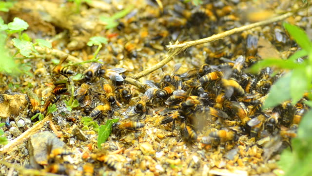 schwenken: group of bees auf rock - formationsfliegen stock-videos und b-roll-filmmaterial