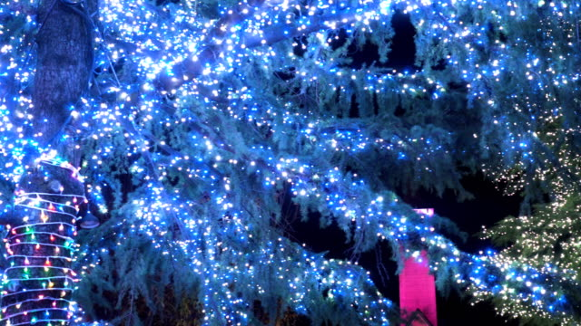 vidéos et rushes de panoramique: décoré à la lumière des arbres de noël - guirlande lumineuse décoration de fête