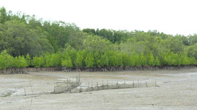 panning : mangrove forest is under low tide - fishnet stock videos and b-roll footage