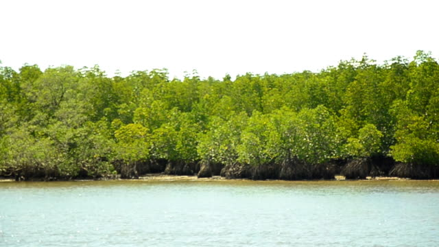 panning : mangrove islands in low tide in afternoon - low tide stock videos & royalty-free footage