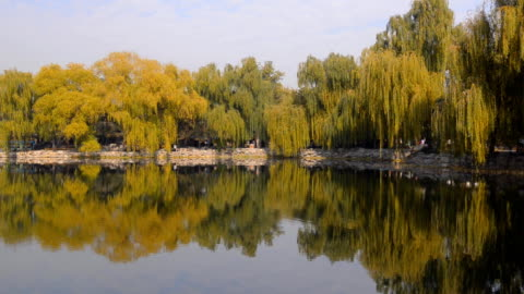 panning: many colorful tree reflecting on lake of  yuanmingyuan - antiquities stock videos & royalty-free footage
