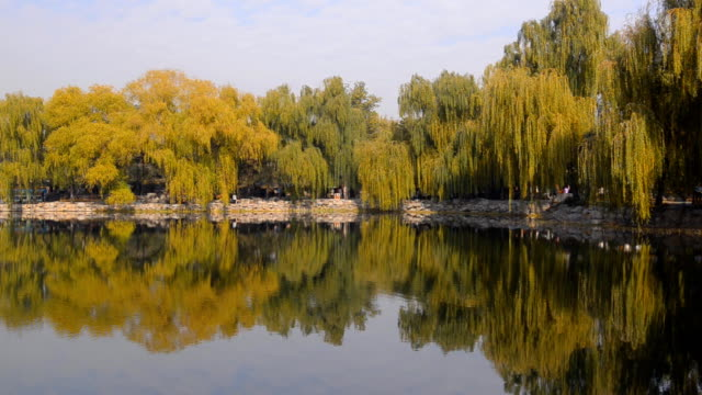 panning: many colorful tree reflecting on lake of  Yuanmingyuan